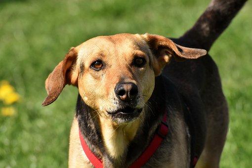 Dog, Animal, Pet, Dear, Eyes, Brown, Good Aiderbichl