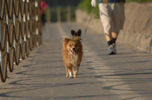 Puppy, Walk, Pet Dogs