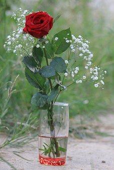 Flower, Rosa, Flowers, Nature, Rose, Plant, Spring