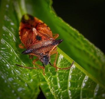 Insect, Macro, Bug, Sheet