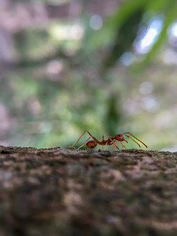 Ants, Animals, Tree, Autumn Leaves, Ant, Plant