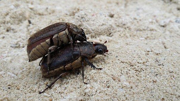 Bugs, Sand, Animal, Nature, Insect, Macro, Wildlife