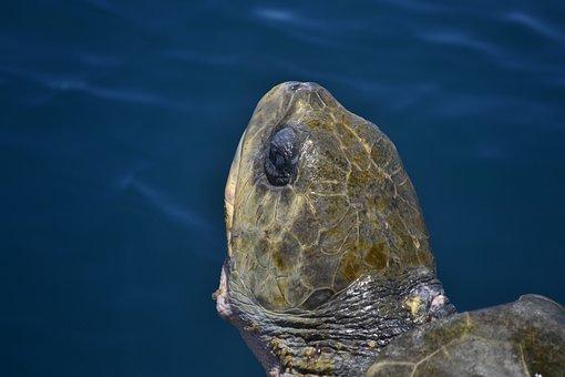 Life, Sea, Texture, Turtle, Reptile, Aquatic, Animal