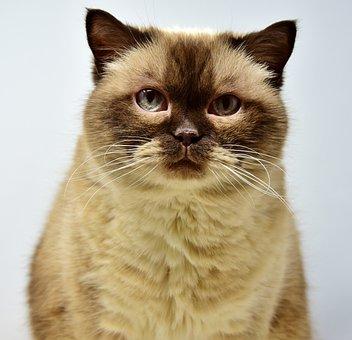 Cat, Pet, Mieze, Short Hair, Domestic Cat