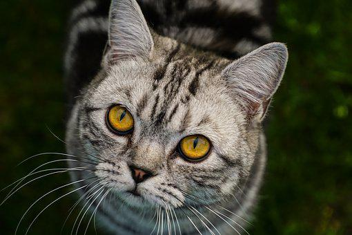 Cat, Close, Animal, View, Head, Domestic Cat, Cat Face