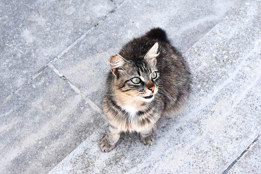 Cat, Kitten, Tomcat, Dachowiec, Domestic Cat, Animal