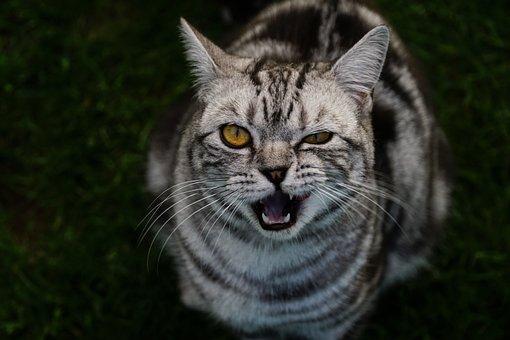 Cat, View, Animal, Eyes, Head, Pet, Domestic Cat