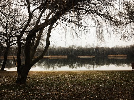 Tree, Wood, Nature, Landscape, Dawn, Fall, Fog