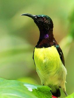 Bird, Avian, Nature, Wildlife, Wild, Beak, Feather