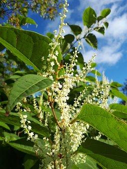 Flower, Latvia, Nature, Garden, Flora, Europe, Bloom