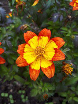 Flower, Latvia, Nature, Garden, Season, Bloom, Day