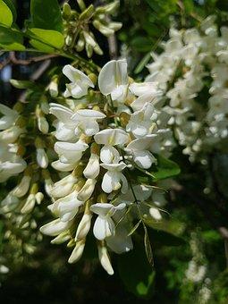 Flower Plant, Nature, Plant, Garden, Sheet, Tree Plant