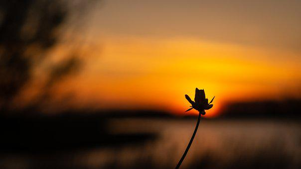 Sunset, Flower, Evening Sky, Sun, Setting Sun, Nature