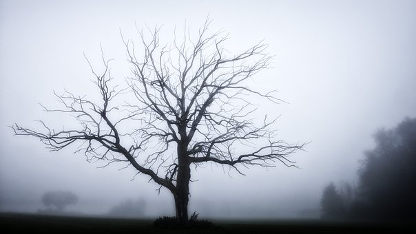 Tree, Fog, Grey, Winter, Mysterious, Mood, Foggy