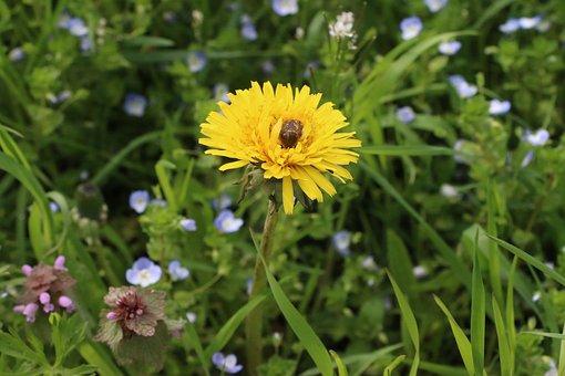Flower, Flowers, Yellow, Green, Macro, Garden, Forest