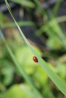 Nature, Prato, Grass, Green, Color, Macro, Insect