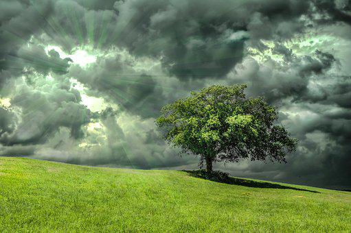 Oak, Tree, Grass, Nature, Clouds, Dramatic, Rays, Greed