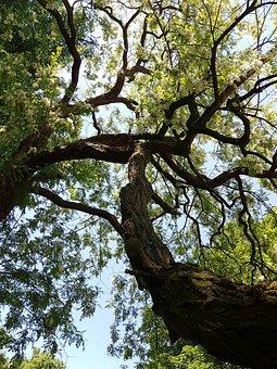 Tree Plant, Wood, Nature, Environment, Landscape, Park