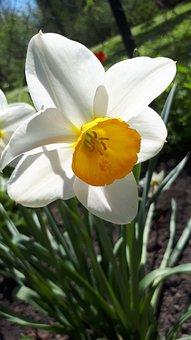 Flower, Latvia, Spring, Nature, Season, Garden, Natural