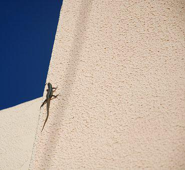 The Lizard, Animal, Lake Dusia, Nature, Lizard, Gad