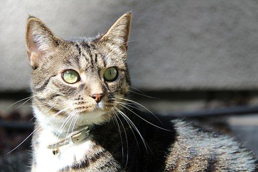 Cat, Kitty, Animal, Look, Surprised, Sun, Sunny, Eyes
