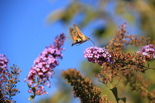 Flowers, Nature, Summer, Butterfly, Living Nature