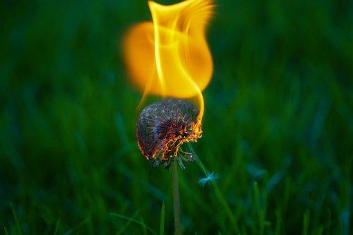 Dandelion, Plant, Fire, Flower, Nature, Close