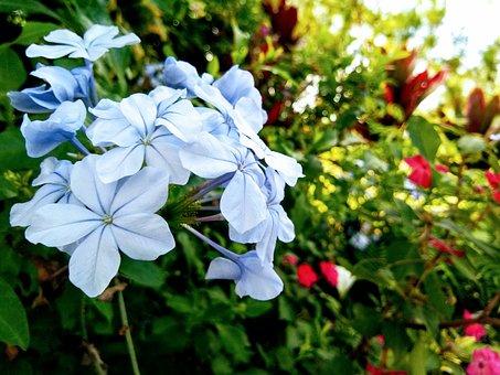 Nature, Green, Floral, Flower Garden, Summer, Blossom