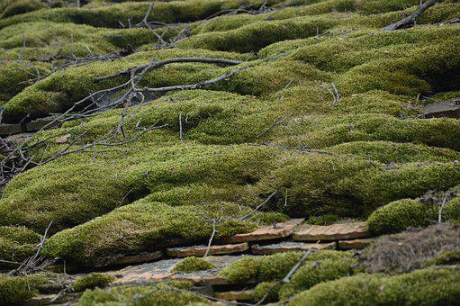 Nature, Roof, Moss