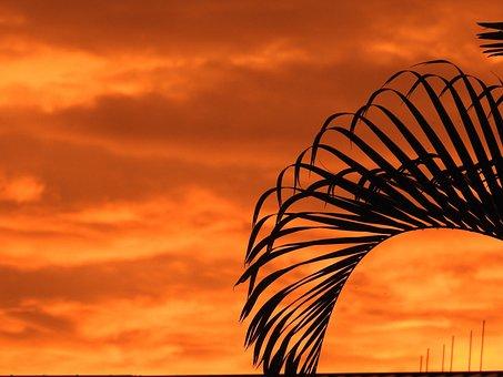 Sunset, Color, Landscape, Outdoor, Palm Frone