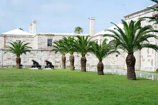 Palm Tree, Bermuda, Vacation, Palm