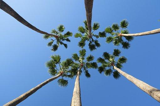 Palm Trees, Blue Sky, Palm, Holiday, Summer