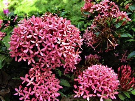 Flower, Pink Flower, Nature, Spring, White, Floral