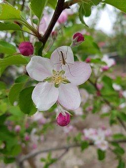 Flower, Nature, Plant, Sheet, Branch, Tree