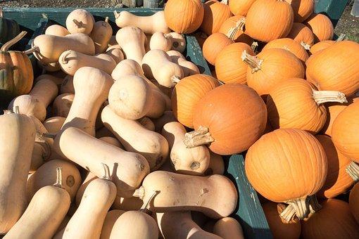 Harvest, Autumn, Squash, Pumpkin, Vegetable, Farming