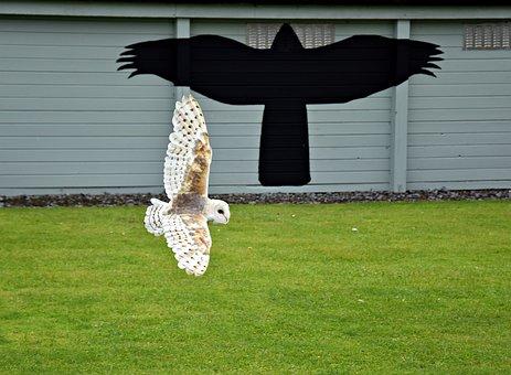 Owl, Birds Of Prey Show, Raptor, Eagle Owl, Zoo