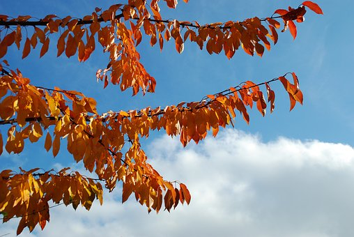 Fall, Tree, Leaves, Sky, Clouds, Branches, Nature