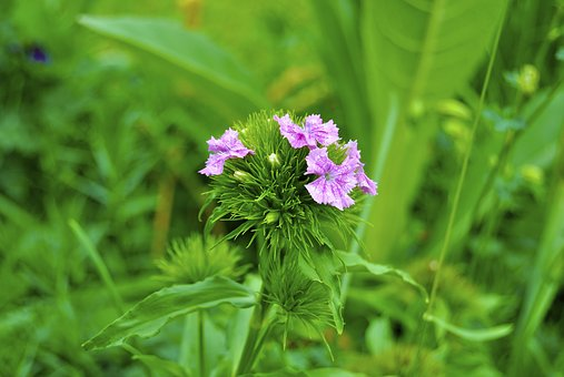 Plant, Green, Leaf, Green Leaf, Nature, Small Plant