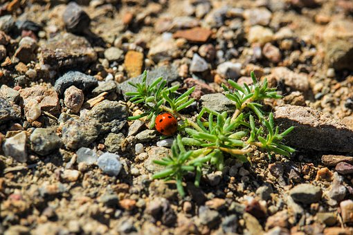 Ladybug, Beetle, Insects, Of God, Summer, Nature