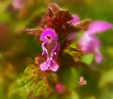 Summer, Flower, Macro