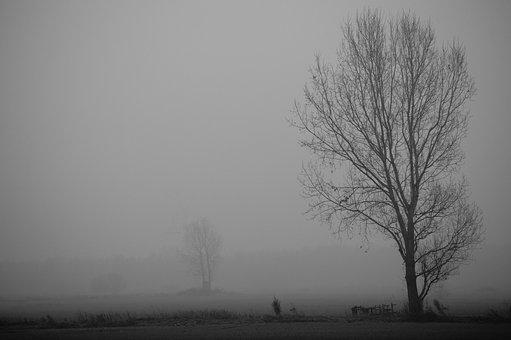 Fog, Winter, Mysterious, Cold, Frost, Tree, Grey