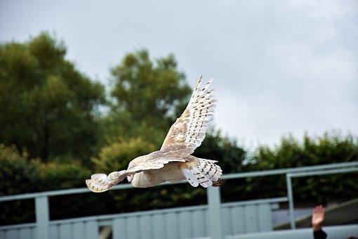 Owl, Raptor, Animal, Plumage, Bird Of Prey, Funny