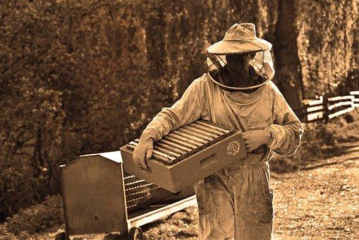 Man, Beekeeper, Beekeeping, Apiarist, Beehive