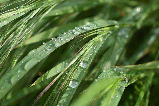 Nature, Wheat, Drop Of Water, Agriculture, Arable