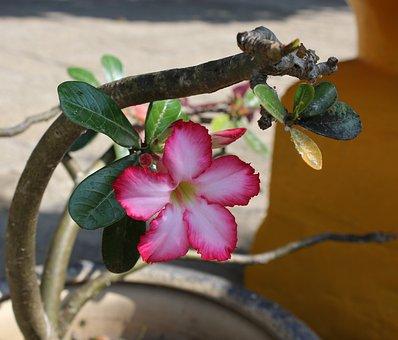Hoa, Sứ, Porcelain, Flower, Condao, Vietnam, Sunny