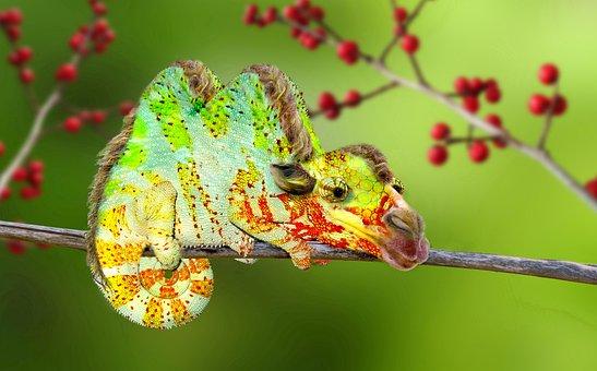 Digiart, Camel, Chameleon, Kameleon, Hybrid, Photoshop