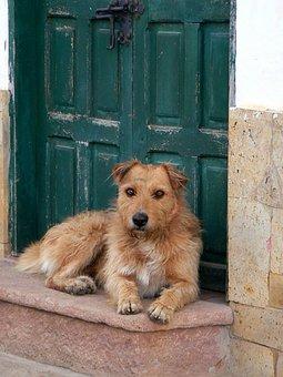 Villa De Leyva, Dog, Animal, Colonial, Boyacá