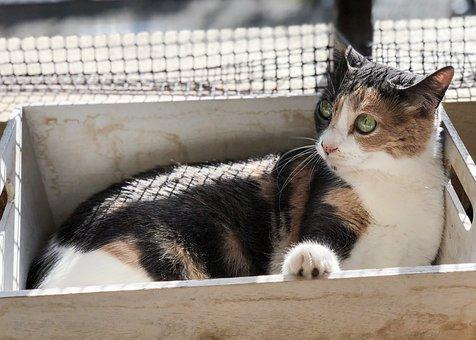 Gata, Cat, Cute Cat, Cat Home, Domestic Cat