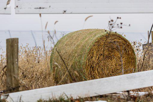 Hay, Fence, Bale, Farm, Nature, Field