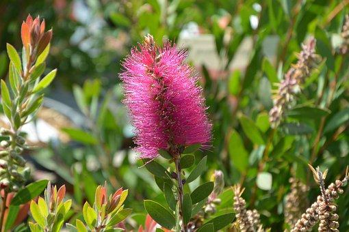 Flower, Pink Flower, Ears Flower, Green Leaves, Nature